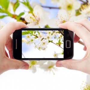 17293660 - an image of shooting photographs with mobile phone